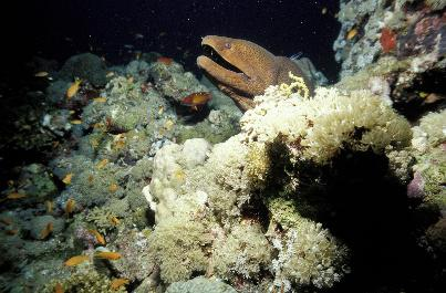 picture of marine life